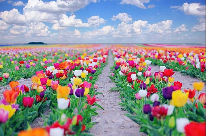 Çiçek Renklerinin Anlamları Nelerdir?